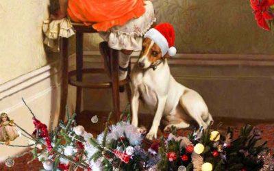 Hot Off The Press! Christmas Cards & 2019 Calendar