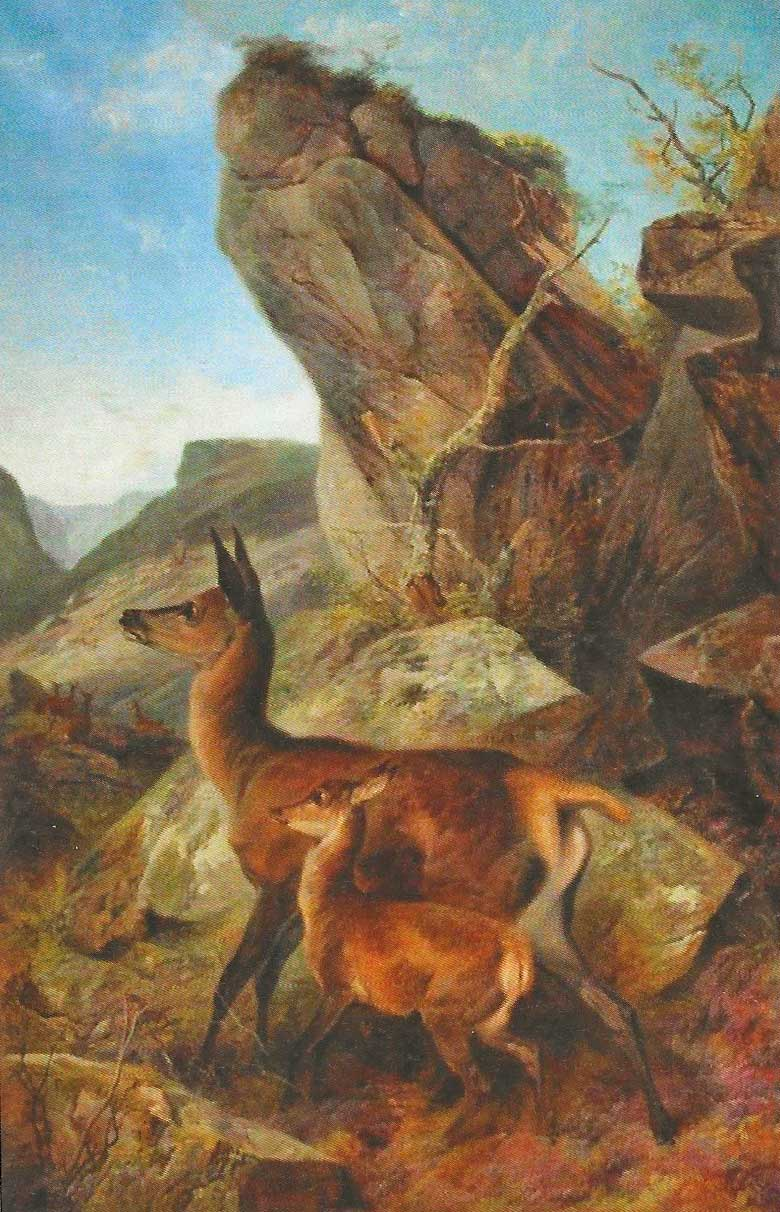 Startled Deer oil painting by Richard Ansdell